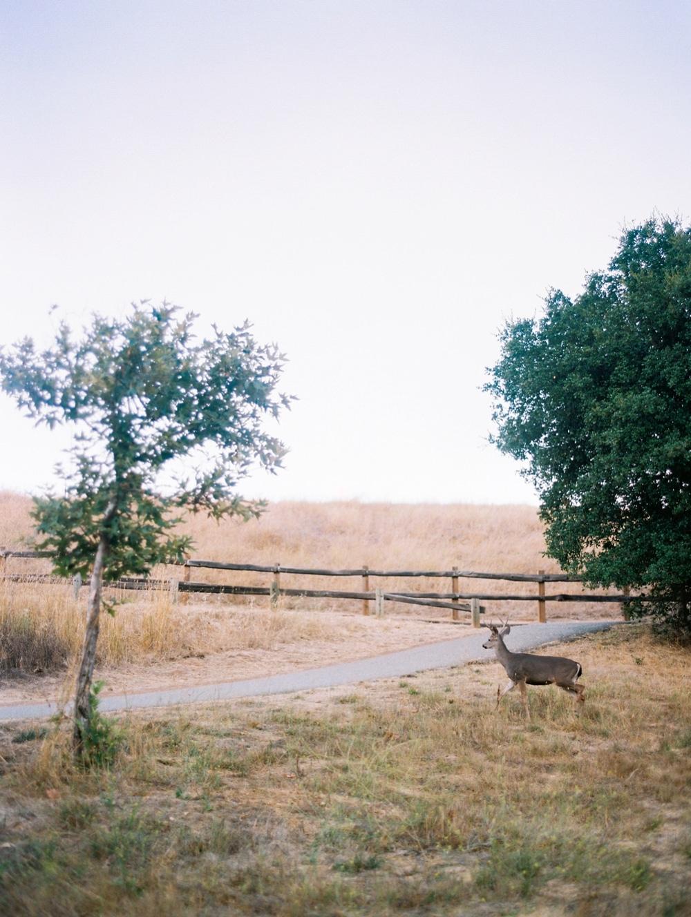 Kristin-La-Voie-Photography-california-wedding-photographer-dog-session-rancho-san-antonio-los-altos-17