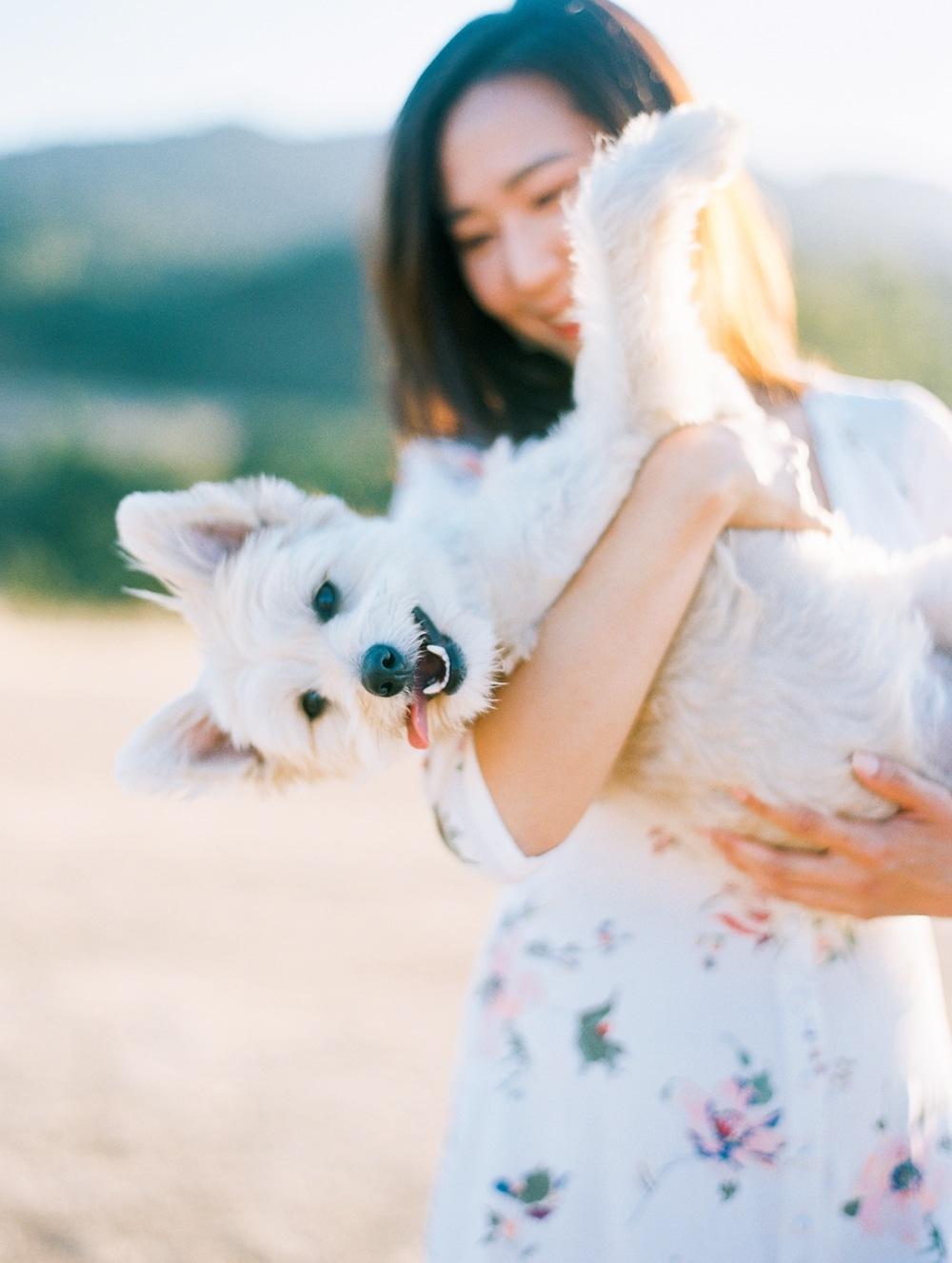 Kristin-La-Voie-Photography-california-wedding-photographer-dog-session-rancho-san-antonio-los-altos-27