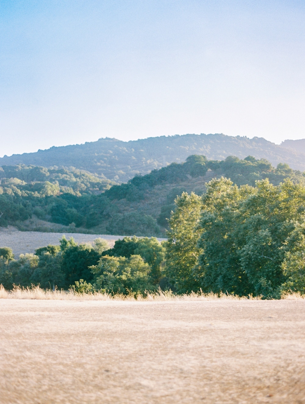 Kristin-La-Voie-Photography-california-wedding-photographer-dog-session-rancho-san-antonio-los-altos-35