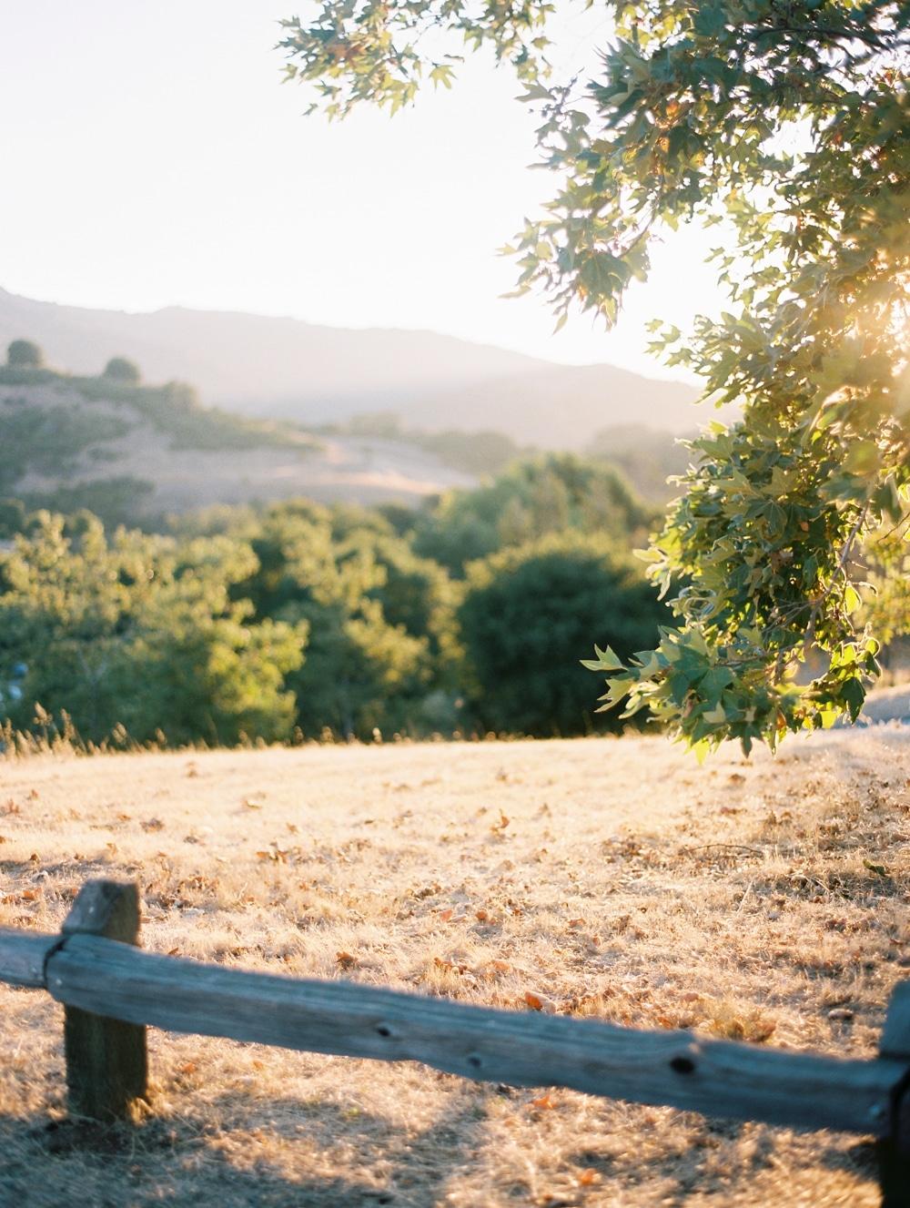 Kristin-La-Voie-Photography-california-wedding-photographer-dog-session-rancho-san-antonio-los-altos-40