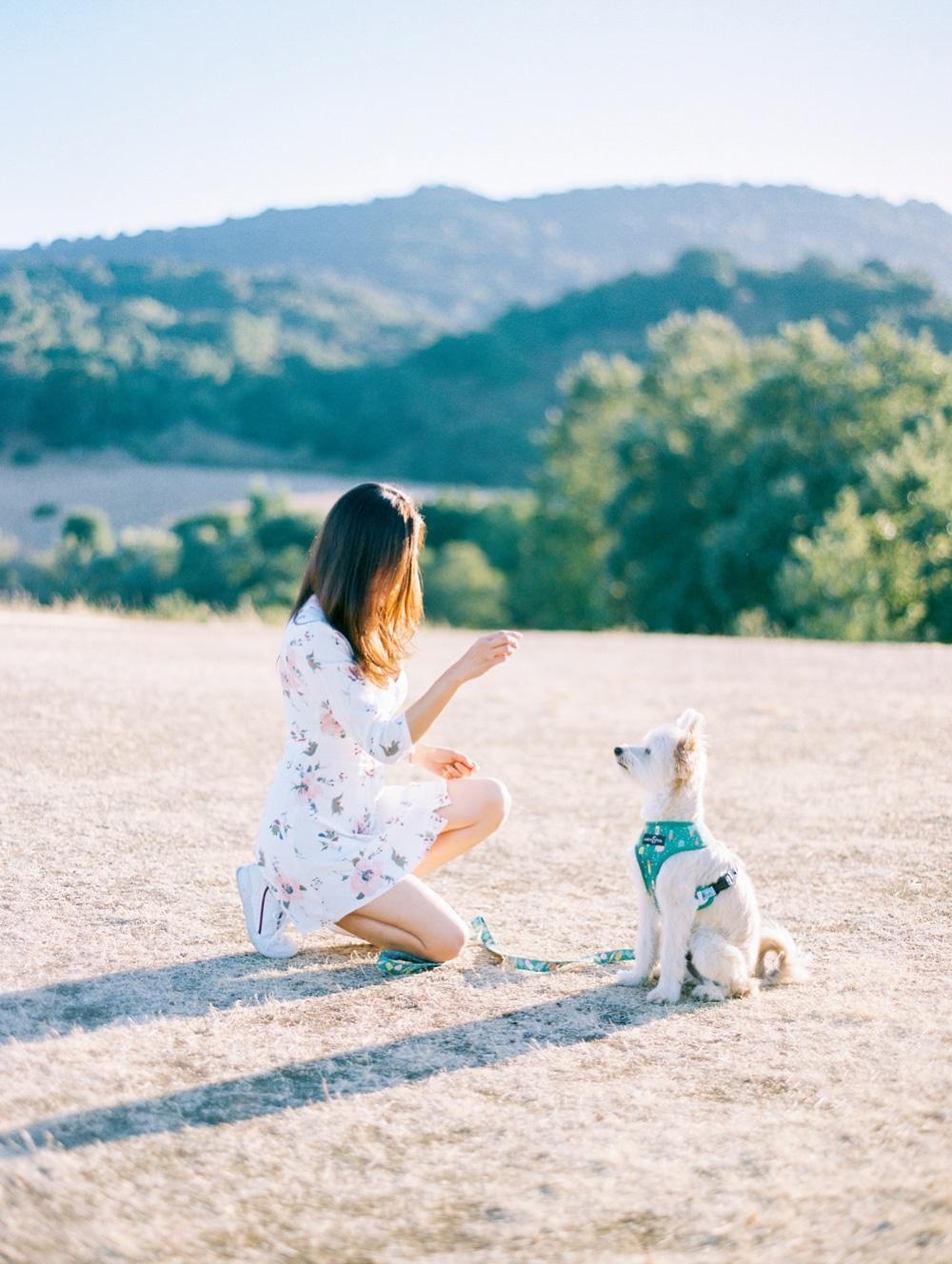 Kristin-La-Voie-Photography-california-wedding-photographer-dog-session-rancho-san-antonio-los-altos-46