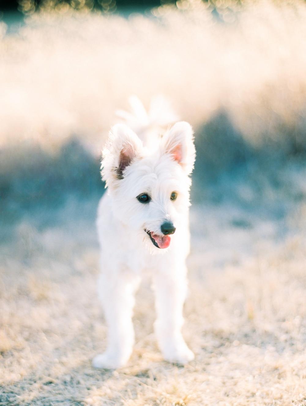 Kristin-La-Voie-Photography-california-wedding-photographer-dog-session-rancho-san-antonio-los-altos-49