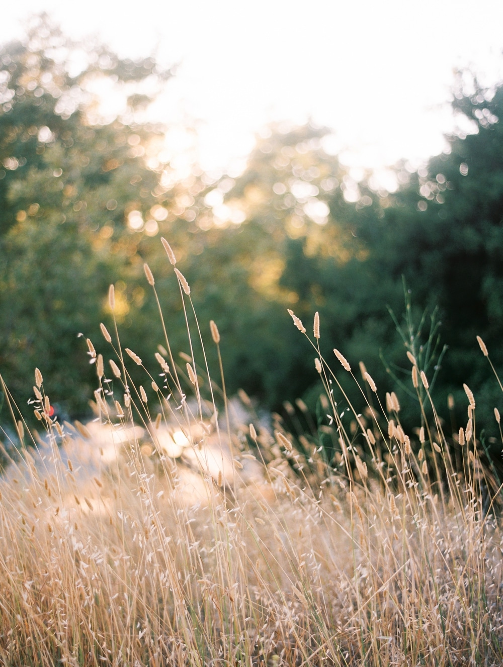 Kristin-La-Voie-Photography-california-wedding-photographer-dog-session-rancho-san-antonio-los-altos-56