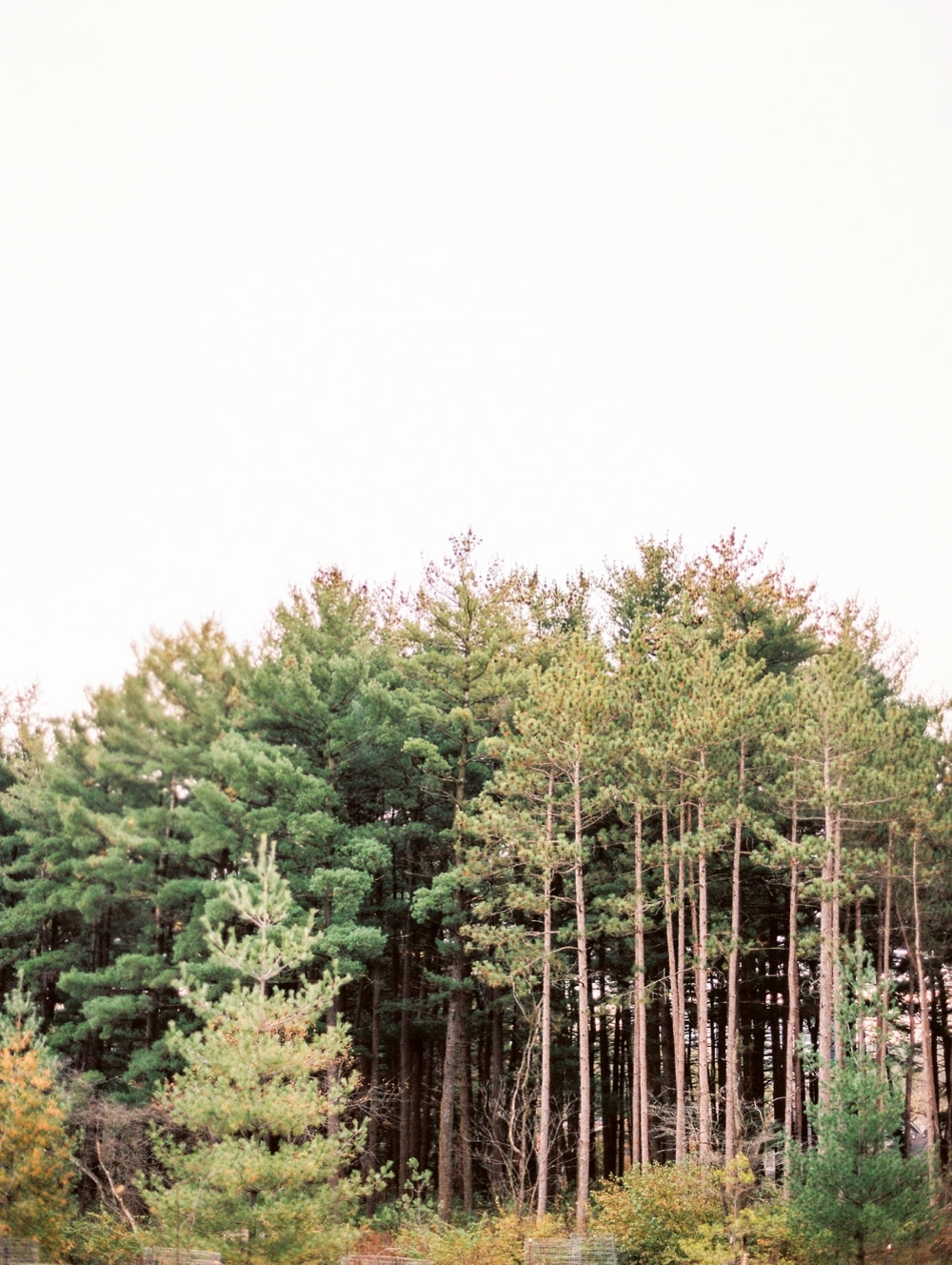 Kristin-La-Voie-Photography-morton-arboretum-chicago-wedding-photographer-101