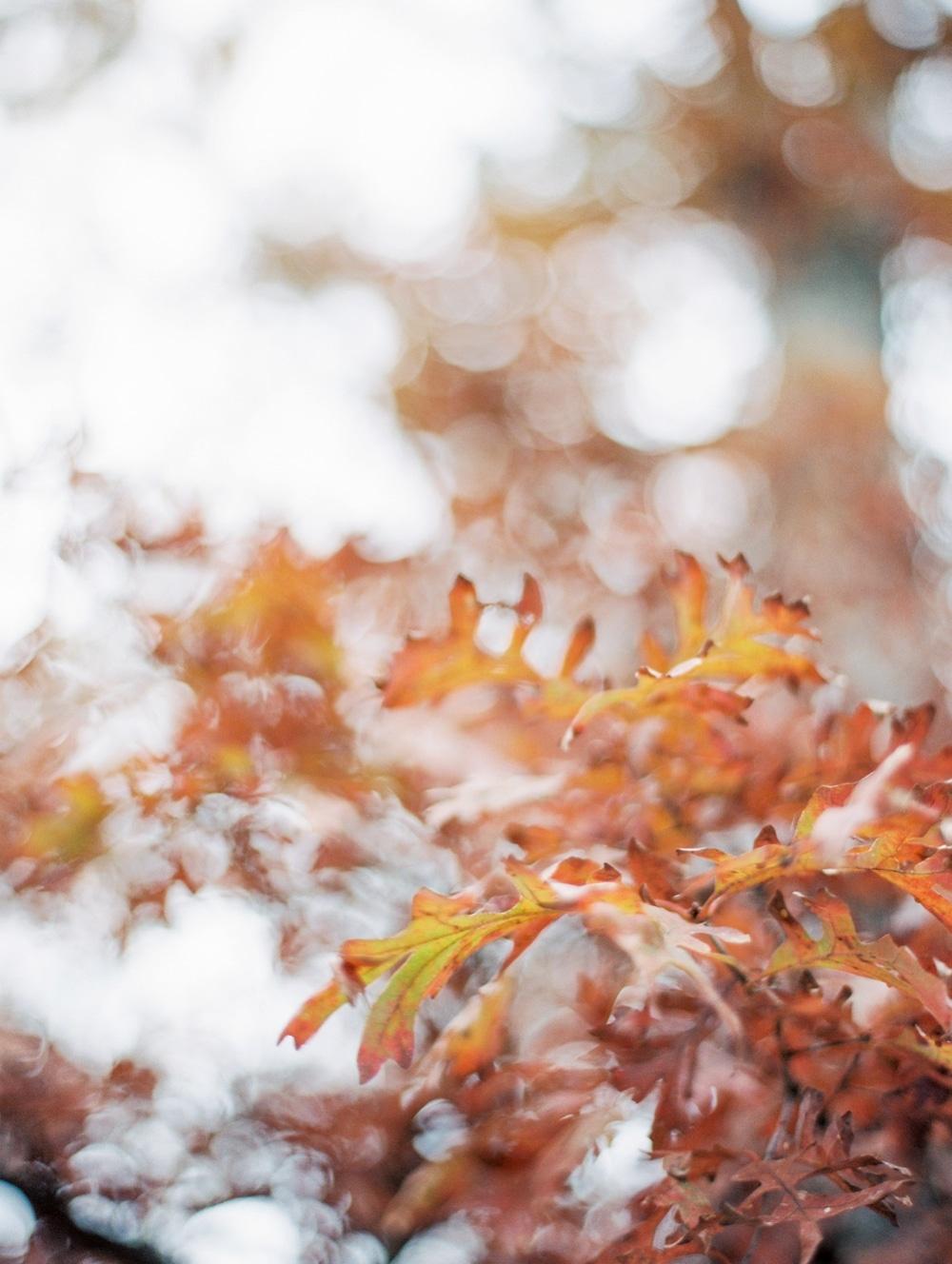 Kristin-La-Voie-Photography-morton-arboretum-chicago-wedding-photographer-98