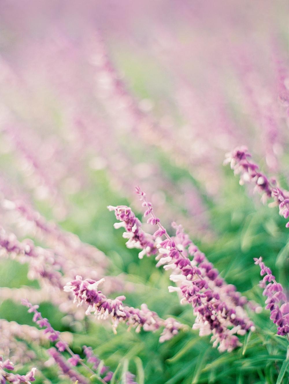 kristin-la-voie-photography-Dallas-Botanical-Garden-Arboretum-Engagement-fine-art-wedding-photographer-3